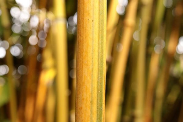 A close-up of a bamboo pole with a less blurred background. Taken on a Canon EOS 77D with a Canon EF-S 35mm f/2.8 Macro IS STM lens.