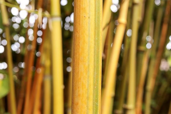 A close-up of a bamboo pole with more detail in the background. Taken on a Canon EOS 77D with a Canon EF-S 35mm f/2.8 Macro IS STM lens.