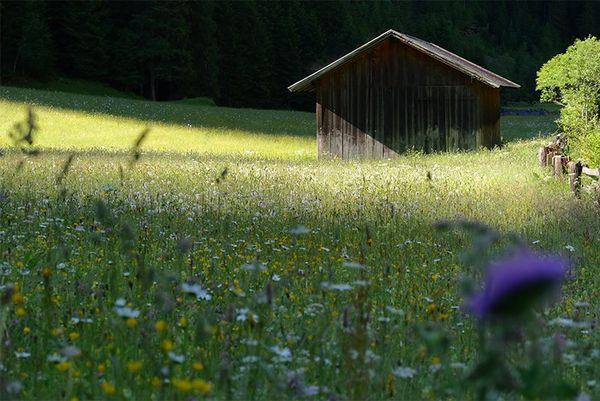 A wooden hut in shade, a flower meadow in front.