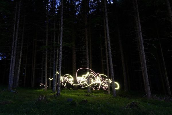Long exposure light trails around tree trunks in a forest glade.