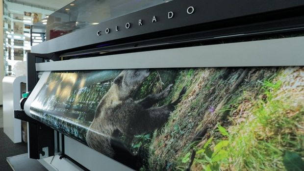 A Canon Océ Colorado 1640 printing out a large-scale shot of a brown bear in a forest.