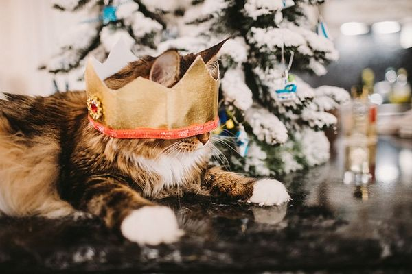 A cat wears a crown