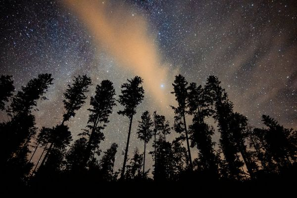 A starry night sky with trees casting a silhouette.