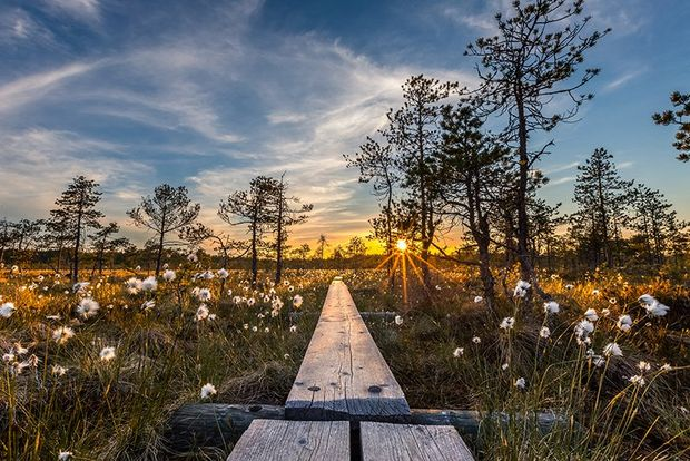 A landscape image shows wooden boards stretching away in front of us through a field full of white flowers and trees at dawn.
