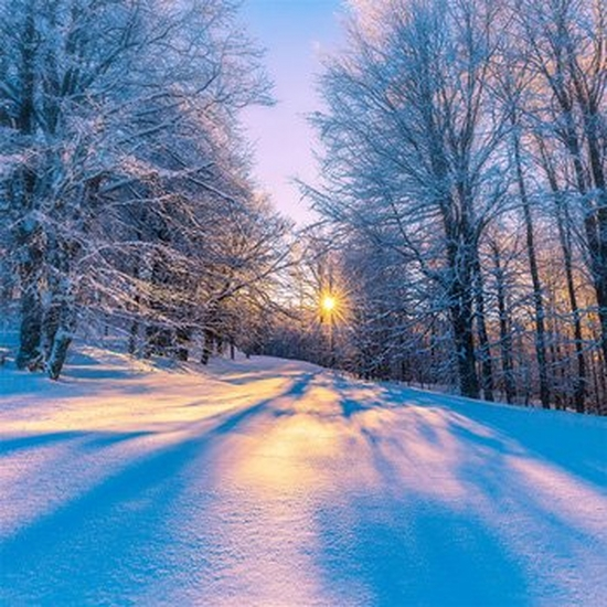 The sun sets behind a snow-covered forest.