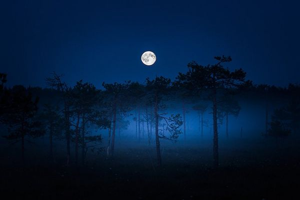 A full moon shines brightly above a row of trees.