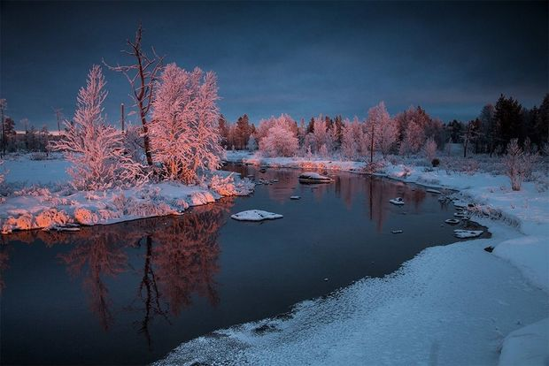 Snow-covered trees glow pink with the light of the setting sun, as the river snakes through the snow in Banff National Park.