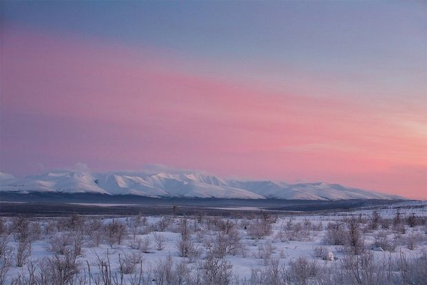 The sunset above a crisp white snow-covered landscape turns the sky shades of pink and purple.