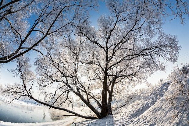 The sun shines through the bare branches of a tree on the snow covered ground.