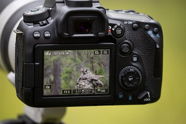 The back of a Canon EOS 90D, showing an owl on the screen.