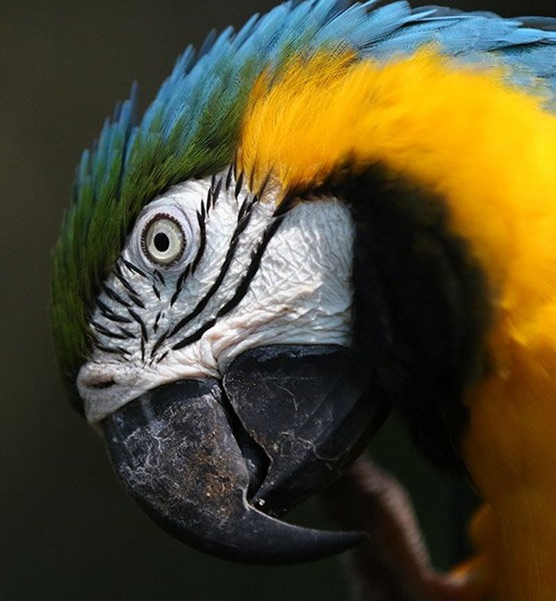 Colourful parrot close up