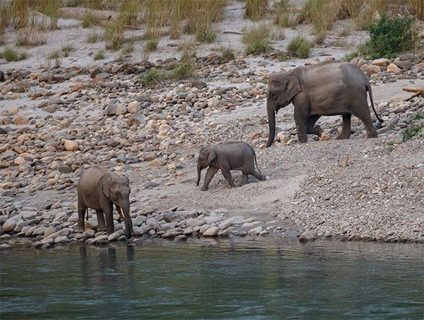 An adult and two young elephants beside a river, photographed by Christian Ziegler on a Canon EOS R.