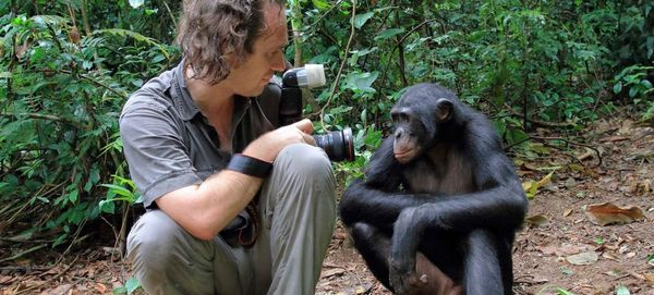 The Story Behind Christian Ziegler's Portrait Of A Rare Wild Bonobo
