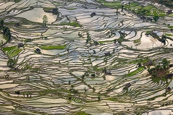 An aerial shot of a rice terrace. The vertical terrain is vast, lush green and filled with pools of water. It looks like a fractured mirror.
