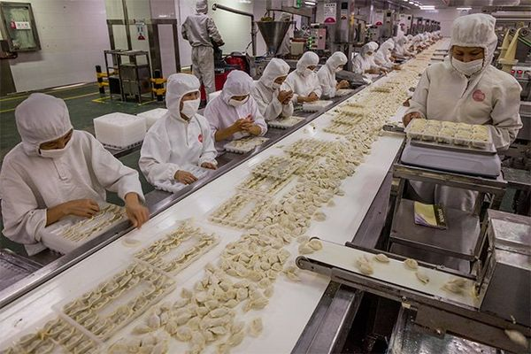 A production line at a factory where hundreds of dumplings are being packed by workers wearing white protective clothing.