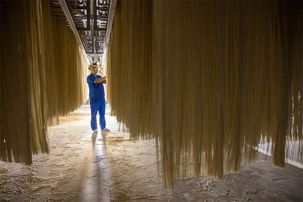 Noodles are strung up to dry at a factory. Long, yellow noodles dangle from the ceiling, taller than a worker in blue overalls who inspects them.