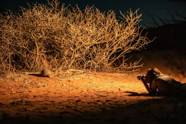 Marina Cano lying on the desert floor photographing a rare pangolin by the undergrowth.