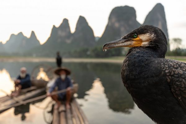 A close-up of a cormorant, a drop of water dripping from its beak. Two fishermen in their boats are visible on the river behind, and jagged hills in the background. Taken by Joel Santos on a Canon EOS 5D Mark IV.