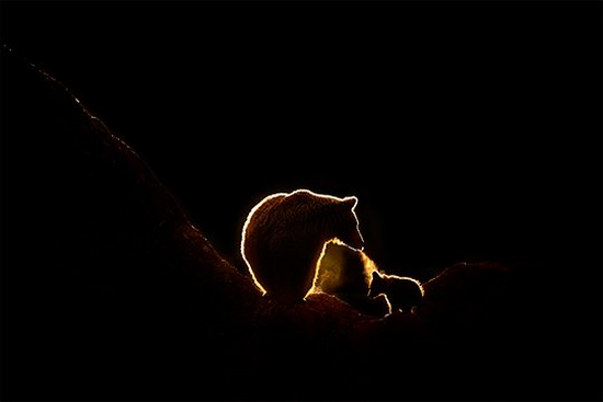 A mother bear with her cub in silhouette. Photo by Marina Cano on a Canon EOS-1D X Mark II.