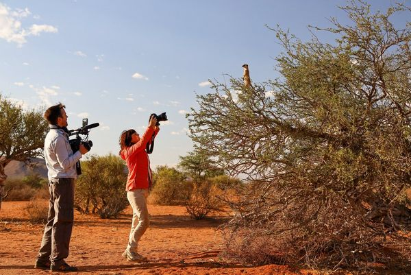 Alex Wykes, holding a Canon EOS C300 Mark II ciname camera to his chest, films Marina Cano holding a Canon EOS-1D X Mark III above her head to shoot a meerkat in a tree.