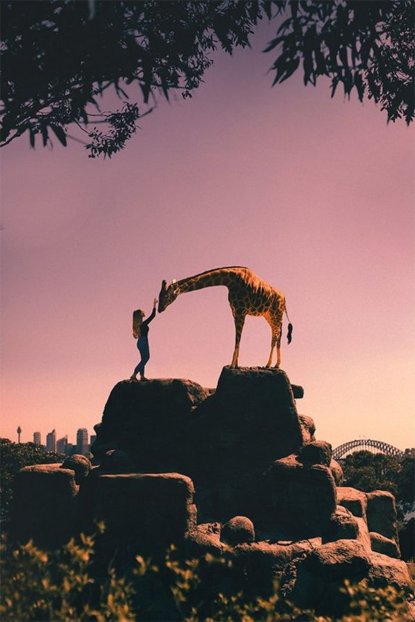 A woman feeds a giraffe while both stand on a formation of rocks as the sun sets behind them.
