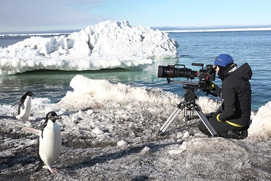 Filming top wildlife shows with a Canon CN20x50 lens