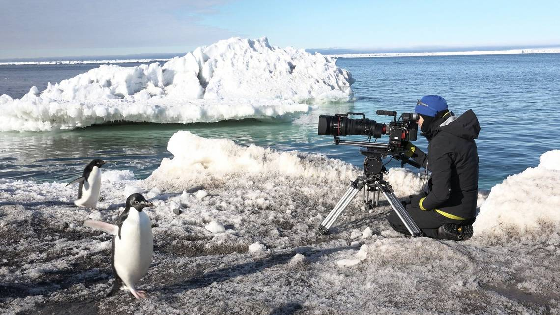 Sophie Darlington films penguins in Antartica with Canon lenses.