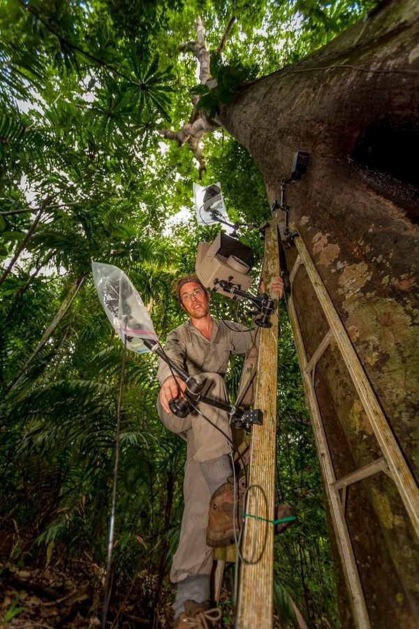 Christian Ziegler sets up flashes on a tree.