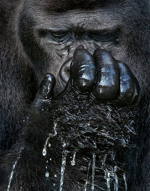 tim_flach_image4_right