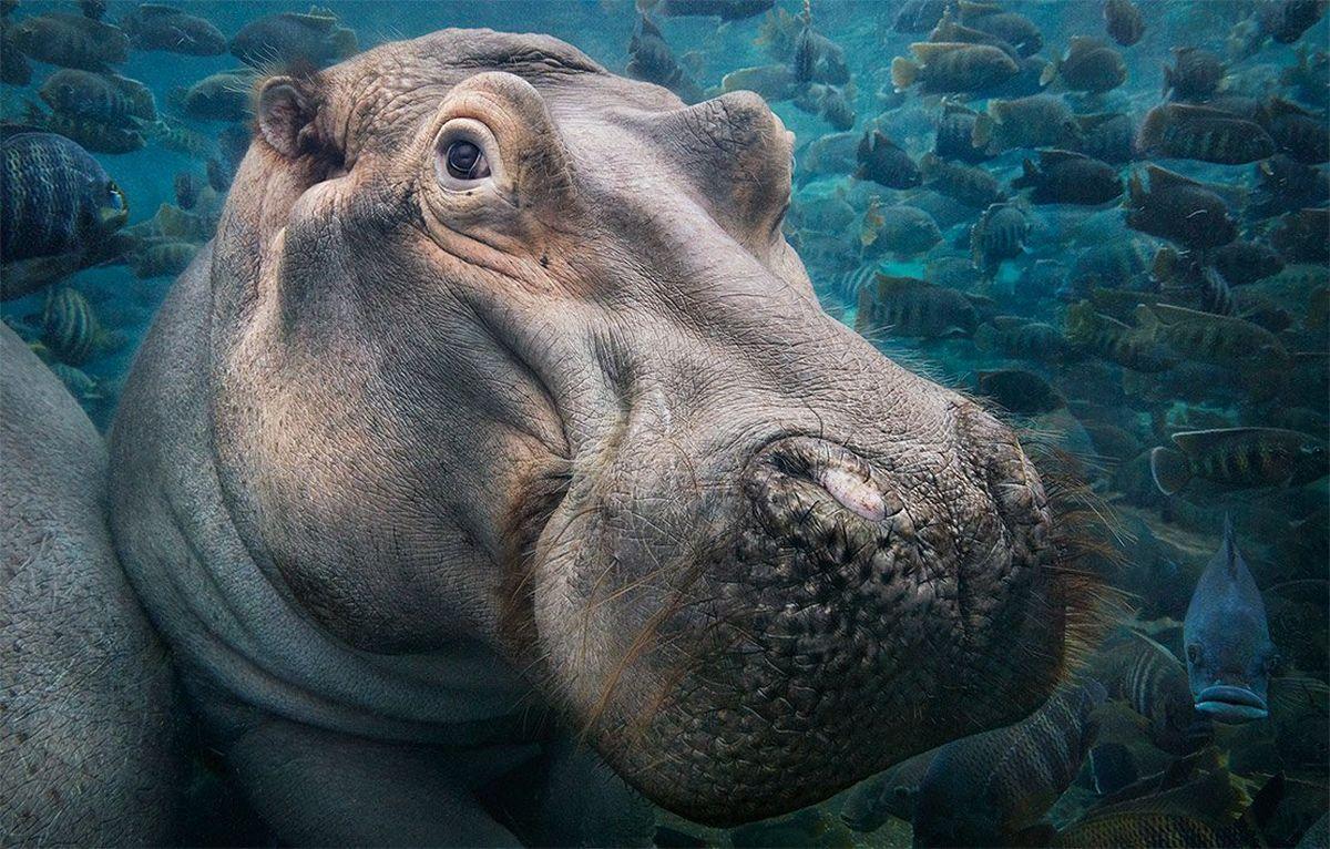 Исчезающие виды животных фото
