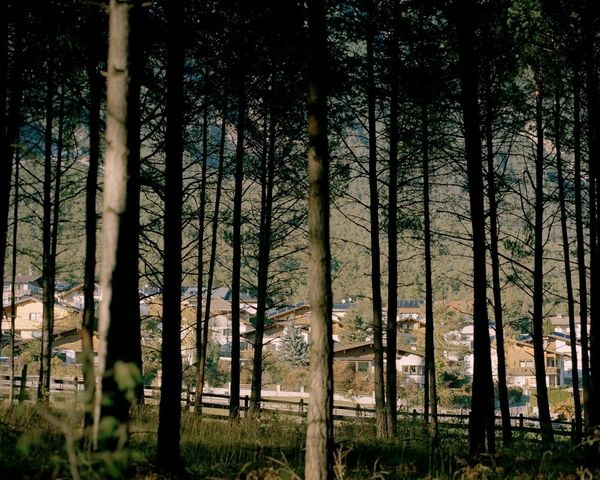 A shot of a village taken through a woodland area.