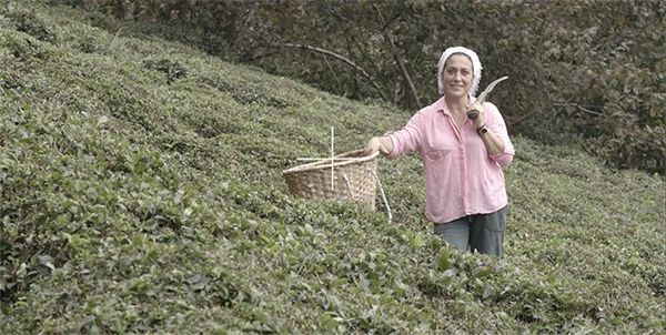 A woman stands in a hillside plantation with a large knife and a wicker basket.