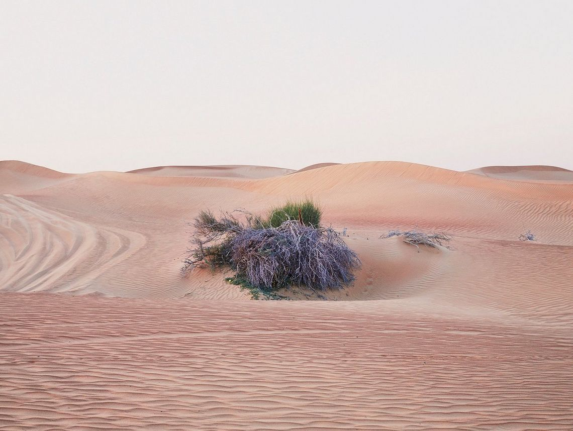 A desert bush photographed near to Dubai, UAE, made an attractive photograph for photographer Felicity McCabe as the flat sky made it feel like a studio background.