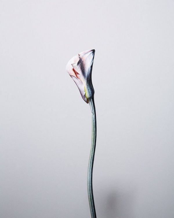 A spray-painted Calla Lily from Felicity McCabe's Remain[s] series reimagines the lost vibrancy of fading cut flowers and leaves, and explores the fleeting nature of time.
