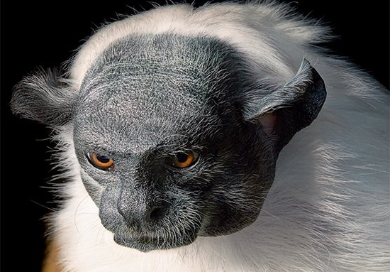 """I sense the urgency"": Tim Flach on documenting endangered species"