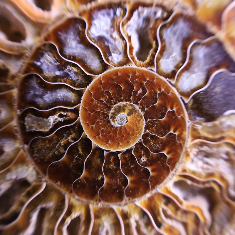 Shot of an ammonite which was taken using the RF 24-105mm F4-7.1 IS STM