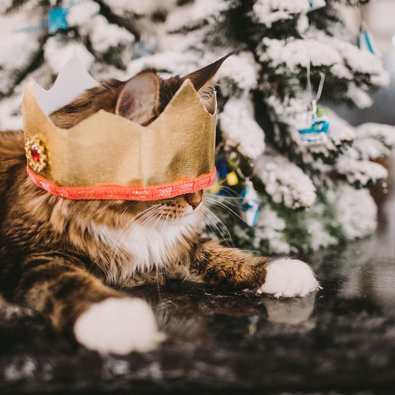 Cat next to christmas tree wearing a paper crown