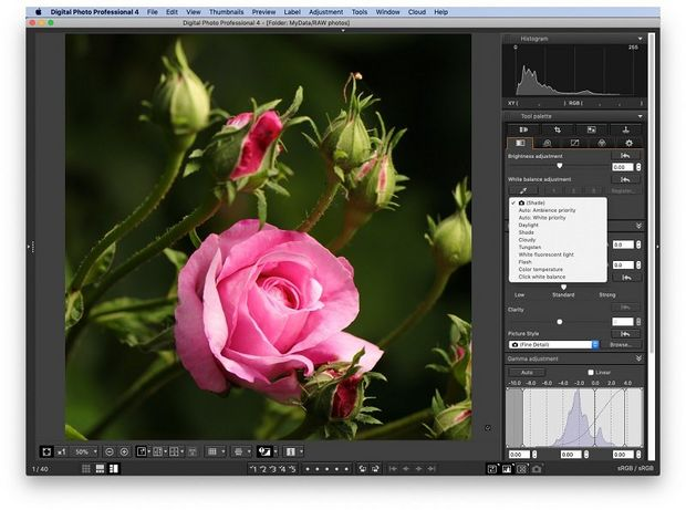 A close-up photo of a pink rose, with the white balance tab open in DPP.