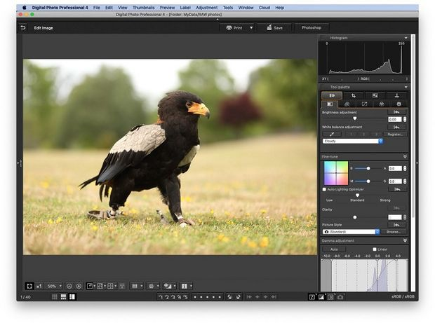 A picture of a black eagle stood on grass open in DPP with the Picture Styles tab open.