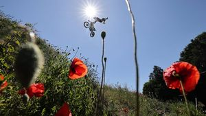 A mountain biker performs a mid-air stunt against the sun. The image is shot from below and framed by red poppies and grasses on the hillside