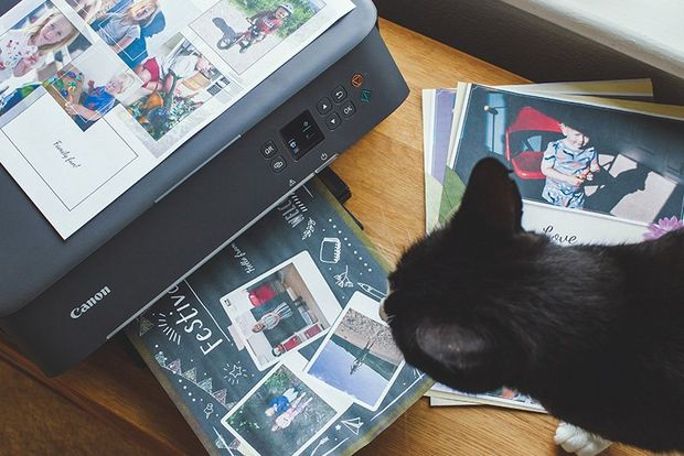 A cat looks at a Canon PIXMA TS5340 printer that is surrounded by printouts.