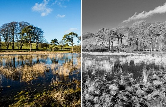 A before and after image of a marshy landscape, unedited on the left and in black and white on the right.