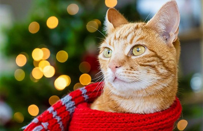 How to shoot festive pet portraits