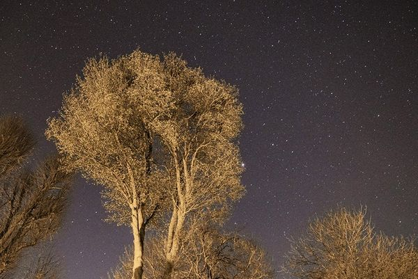 A starry night sky with trees in the foreground.