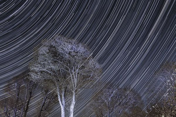 Circular star trails creating a pattern across the night sky behind a foreground of trees.