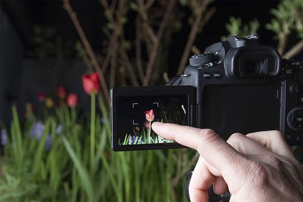 A photographer taps a finger on a screen to focus a shot of a tulip.