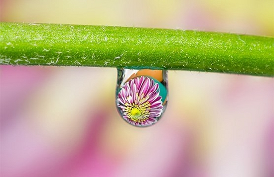 A water droplet on a flower stem, reflecting a flower head.