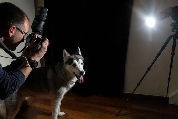 A photographer takes a photo of a dog illuminated from the other side by a spotlight tube.