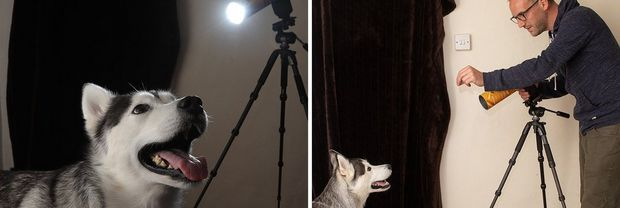 A photographer, standing next to a spotlight tube on a tripod, attracts the attention of a dog.