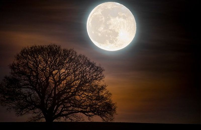A close up of a full moon above a lone tree in a field.
